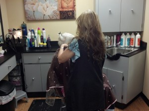 Best Hair Salon Gastonia Stylist 8